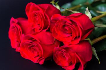 Red roses flower on black background.