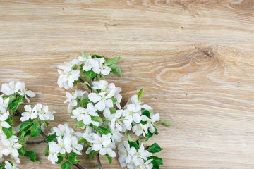 Flowering branch of an apple tree on a wooden fot, frame, background.