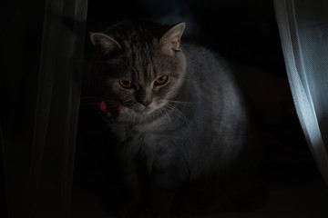 Evil Cat Gentleman Gets Out of Darkness
