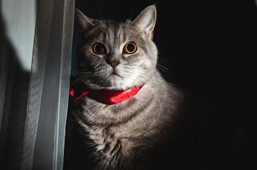 Surprised raised cat gentalman frightened and surprised