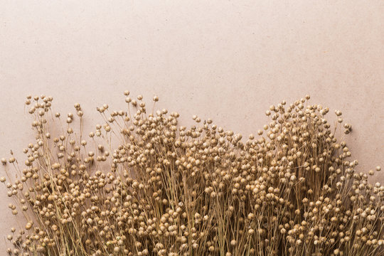 plant dry flax on a beige background, a bunch of flax, a lot of dry plants