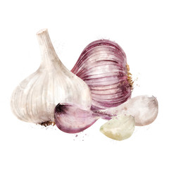 Garlic on white background. Watercolor illustration