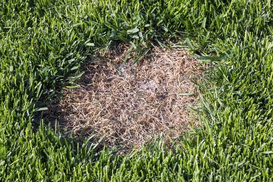 Lawn has suffered damage from a disease or pet. Need to update the lawn.