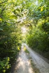 nature wood road with sun shine