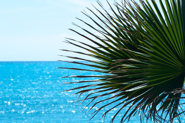 Frame, background, palm tree and blue sea, space for text. Theme of vacation, recreation, the sea