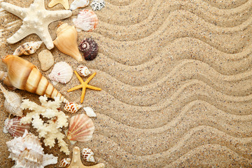 Seashells and starfishes on beach sand