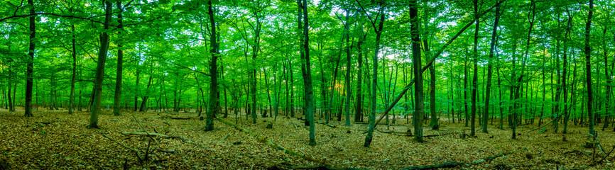 Wald Wanderung - Germany