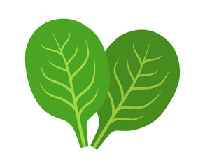 Two spinach green vegetable leaves flat vector icon for food apps and websites