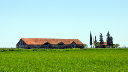 Old abandoned farm building in green field