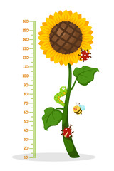 Meter wall with sunflower.vector illustration