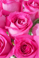 beautiful roses flowers bunch