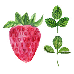 Watercolor strawberry isolated on white background, hand drawn paint illustration berry and leaf, organic vegan food herbal decorative fruit for cosmetics package, design restaurant menu, advertising