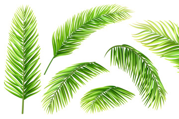 Palm tree leaves vector set. Realistic branches of a tropical plant for decorating a vacation card, invitation or flyer.