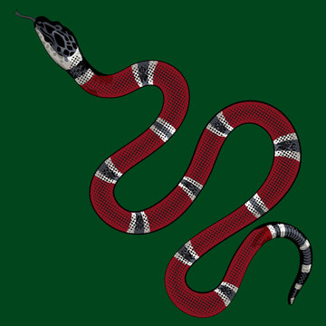 red snake vector.Lampropeltis triangulum vector.Sticker and hand drawn snake for tattoo.Red snake Reptile on white background.