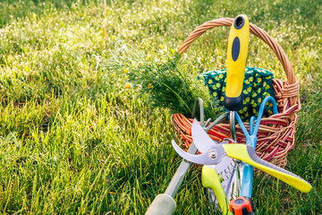 Two hand garden rakes, trowel, pruner, gloves and bouquet of field chamomiles in wicker basket with green grass around