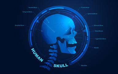 vector of human skull anatomy presented with futuristic technology style for educational infographic