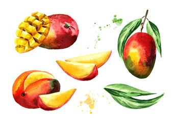 Mango composition set. Watercolor hand drawn illustration  isolated on white background