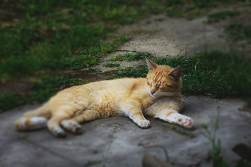 A cat resting in the garden.