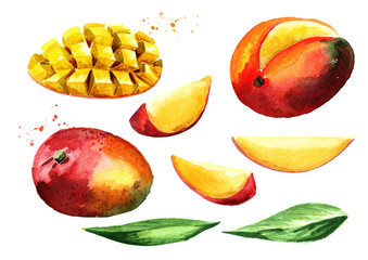 Mango set. Watercolor hand drawn illustration, isolated on white background