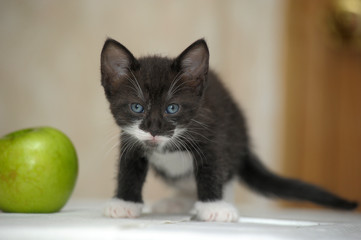black with white little kitten and green apple