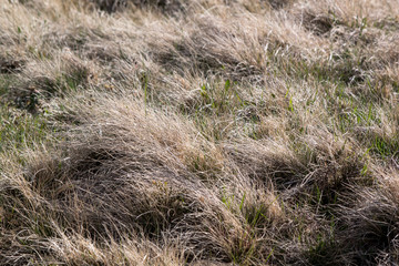 dry grass on a field