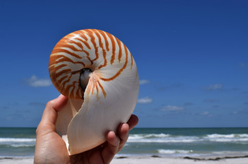 Chambered nautilus sea shell against beach and blue sky.