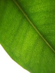 Green leaf plant flower blurred defocused background texture macro photo