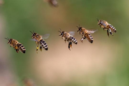 Fliegende Gruppe Bienen in einer Reihe vor unscharfem Hintergrund