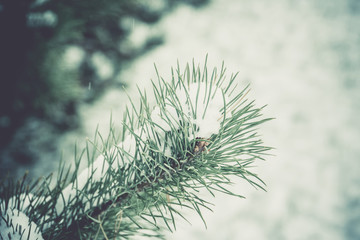 Evergreen tree under snow retro