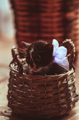 kitten with a bow sits in  basket