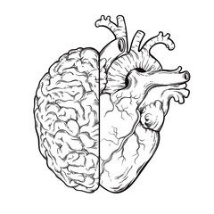 Hand drawn line art human brain and heart halfs - Logic and emotion priority concept. Print or tattoo design isolated on white background vector illustration.