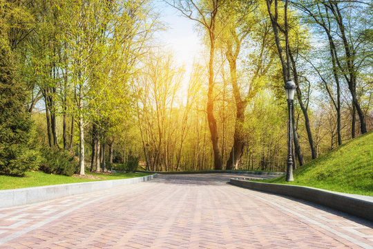Green spring sunny city park with road and beautiful trees alley