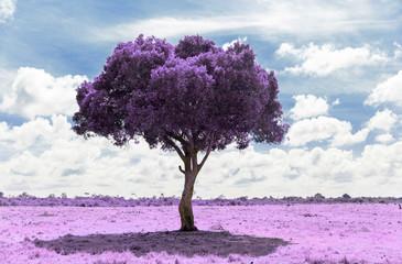 fantasy and nature concept - purple acacia tree in maasai mara national reserve savannah in africa, surreal infrared effect Fotoväggar
