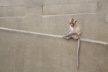baby monkey sitting on the concrete cement.