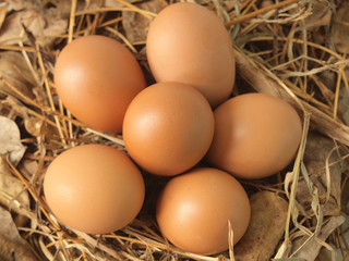 Chicken eggs on dry grass