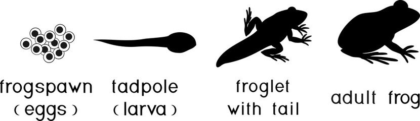 Silhouettes of four stages of frog development with titles