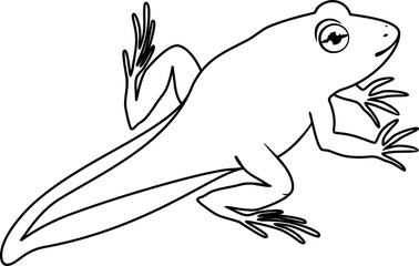 Coloring page. Young frog with tail