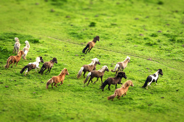 Wild horses running on a green meadow