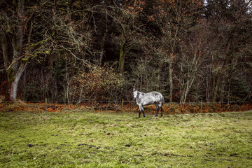 White horse on a field with a fence