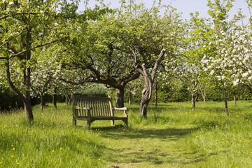 Bench under trees in green garden