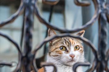 Hauskatze mit Kopf hinter Gitter auf Fenstersims im Freien