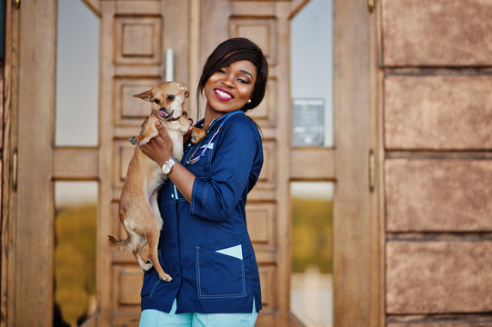 African american veterinarian doctor female with stethoscope and small dog on hands.