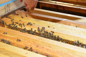 Frames with honey, honey, wax and bees in the apiary