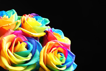 Amazing rainbow rose flowers on black background