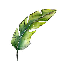 Tropical green lesves  in a watercolor style isolated. Aquarelle leaf for background, texture, wrapper pattern, frame or border.