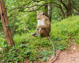 Monkey in the wild nature