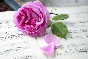 Alte Musiknoten mit erblühter Rose (Rosaceae), Liebe, Muttertag, Romantik