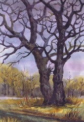 """Drawing """"Two Trees Late Fall"""". Paper, watercolor"""