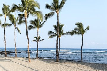 Coconut palm trees in a tropical beach