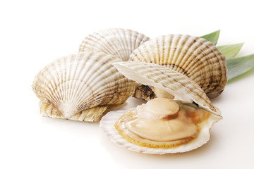 In de dag Schaaldieren ほたて貝 Scallops